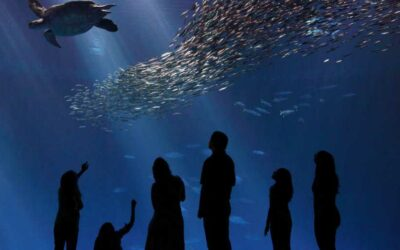 Enjoy The Monterey Bay Aquarium