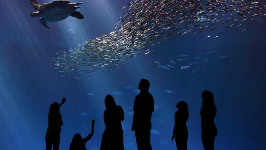 Monterey Bay Aquarium Tour