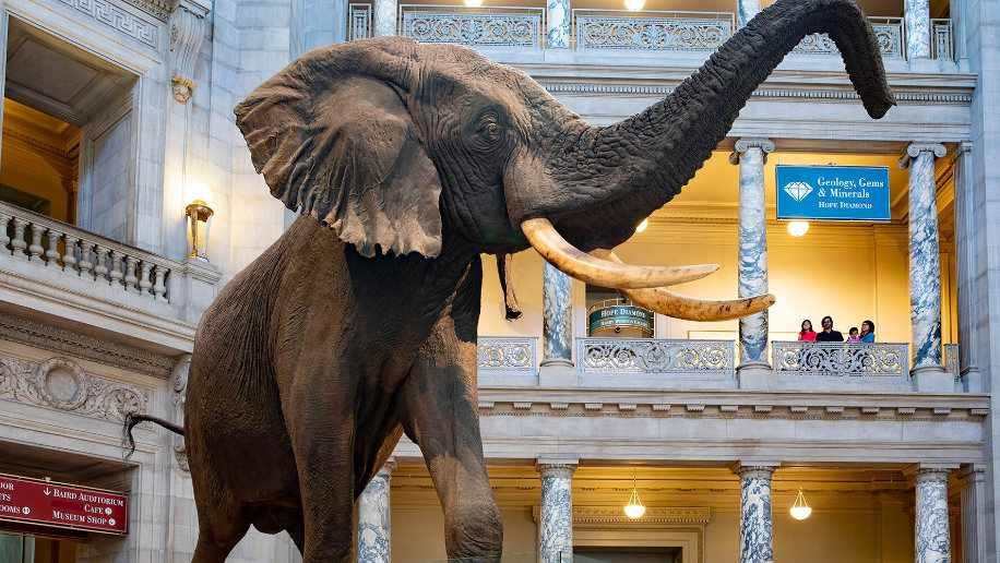 Smithsonian Museum Elephant Exhibit